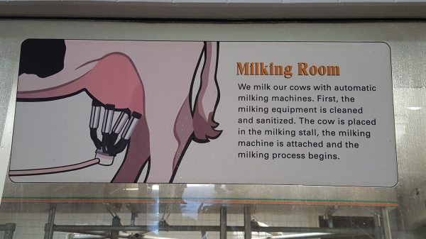 Cow Milking Room Sign